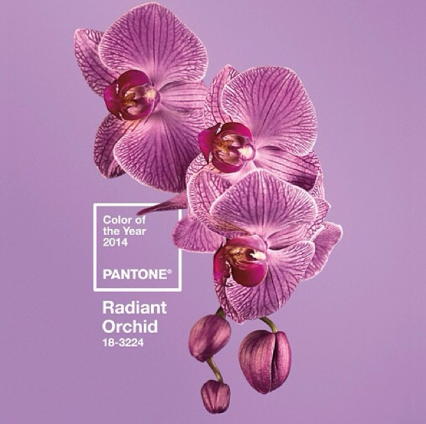 Blog-pantone-color-of-the-year-2014